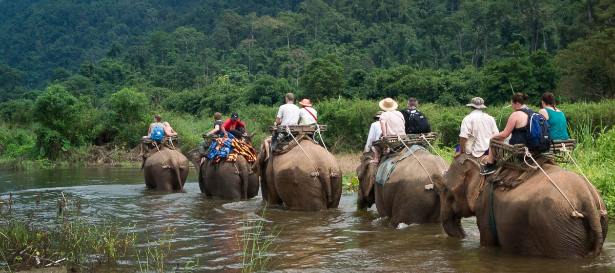 We provide excellent excursions, such as elephant trekking.