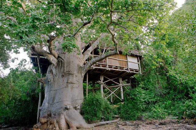 Moja Treehouse
